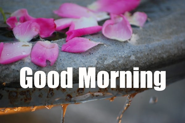 Best Good morning images with flowers hd download