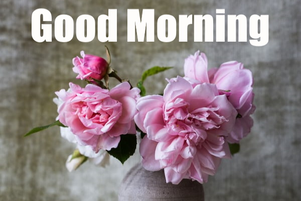 morning images with flowers hd download