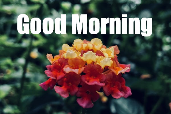 Best Good morning flower images free download hd